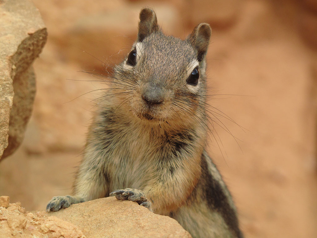 We were hiking up a series of switchbacks in Bryce, and this squirrel followed us, begging for food at each level - he was very persistent moving up the hill with us.