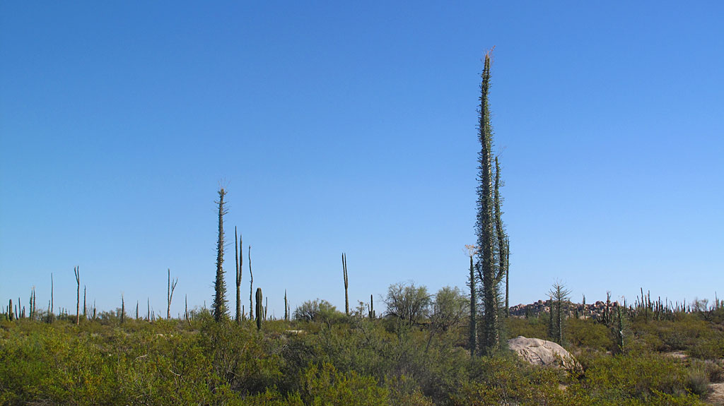 Due to recent rains, the desert was green and blooming and happy.