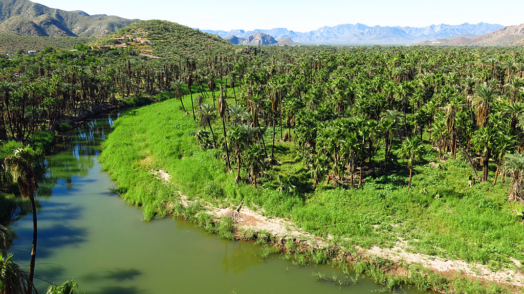 """The Río Mulegé is one of only two """"real"""" rivers in Baja California Sur. The river saw lots of recent action from hurricane Odile."""