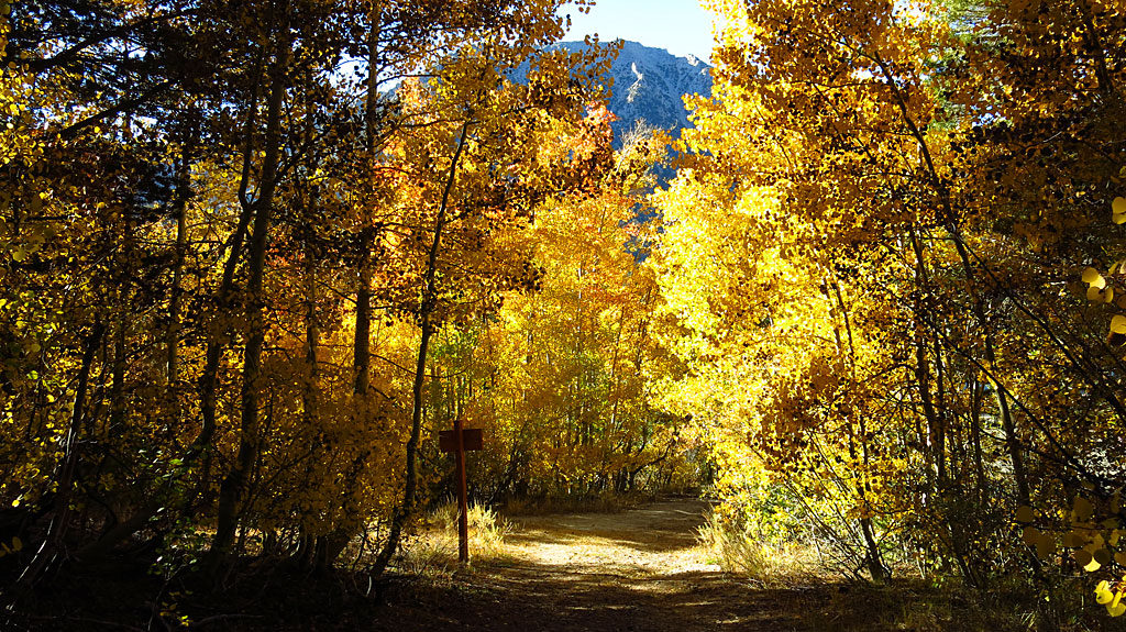 The trail to Lake Dorothy. The best fall colors were over 9,000' elevation, but slowly creeping down the mountain.