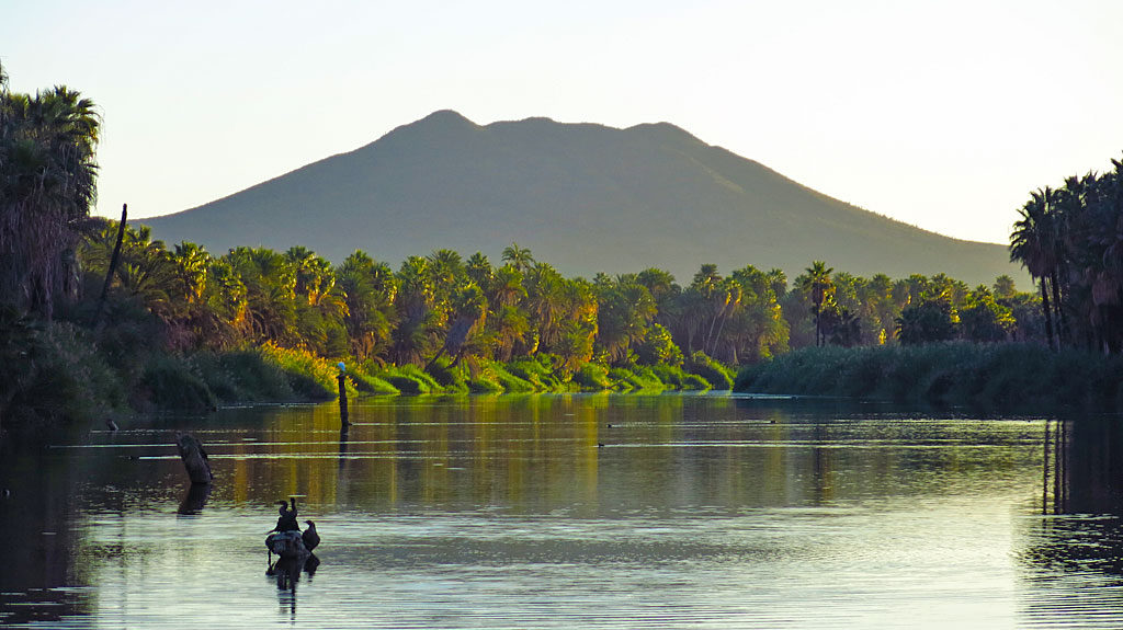 Early morning light on the Rio San Ignacio palms, Volcán las Tres Virgenes in the background.