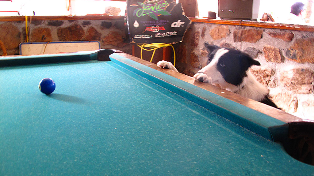 A dog obsessed with a pool ball at Buenaventura.
