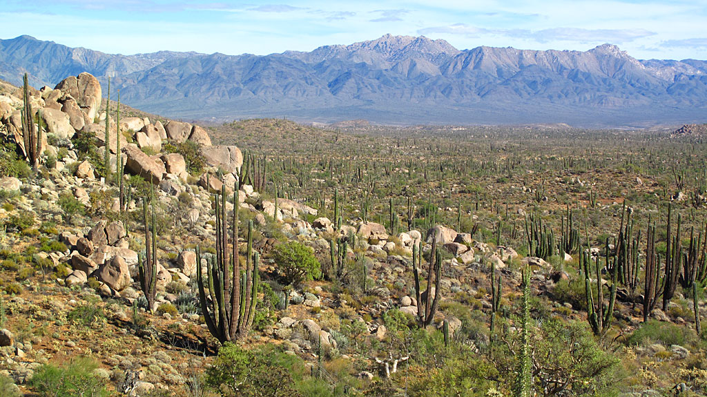 The Baja desert near Catavina.