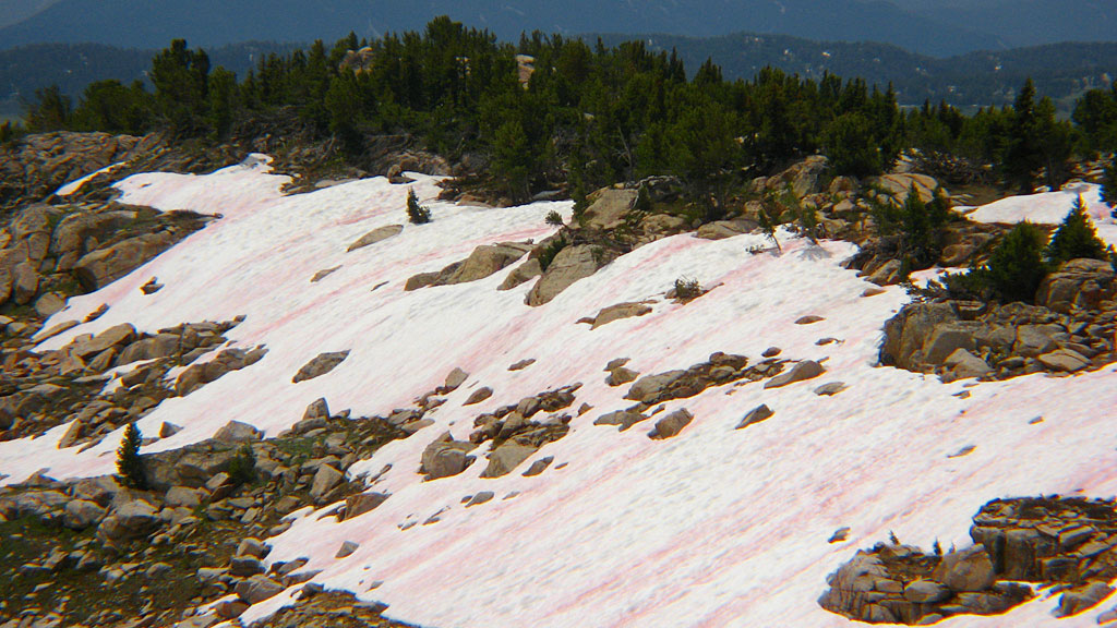 Watermelon snow