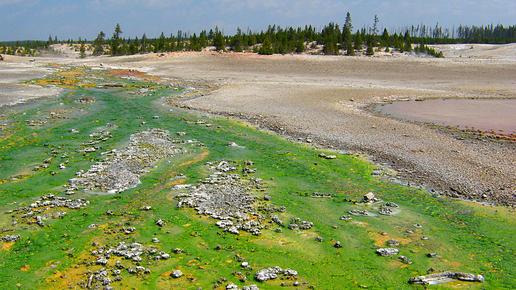 Many different colors of algae flourish in geysers' hot-water outflow.