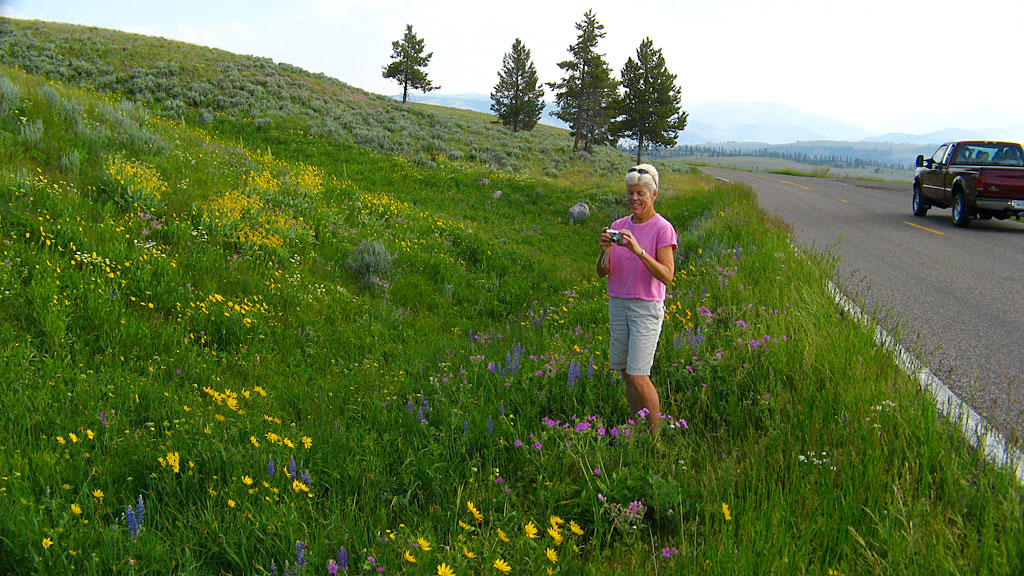 It was hysterical - we'd occasionally stop to take photos of something, in this case the wildflowers, and others would slow down and stop on the highway, thinking we'd made a buffalo or elk spotting.