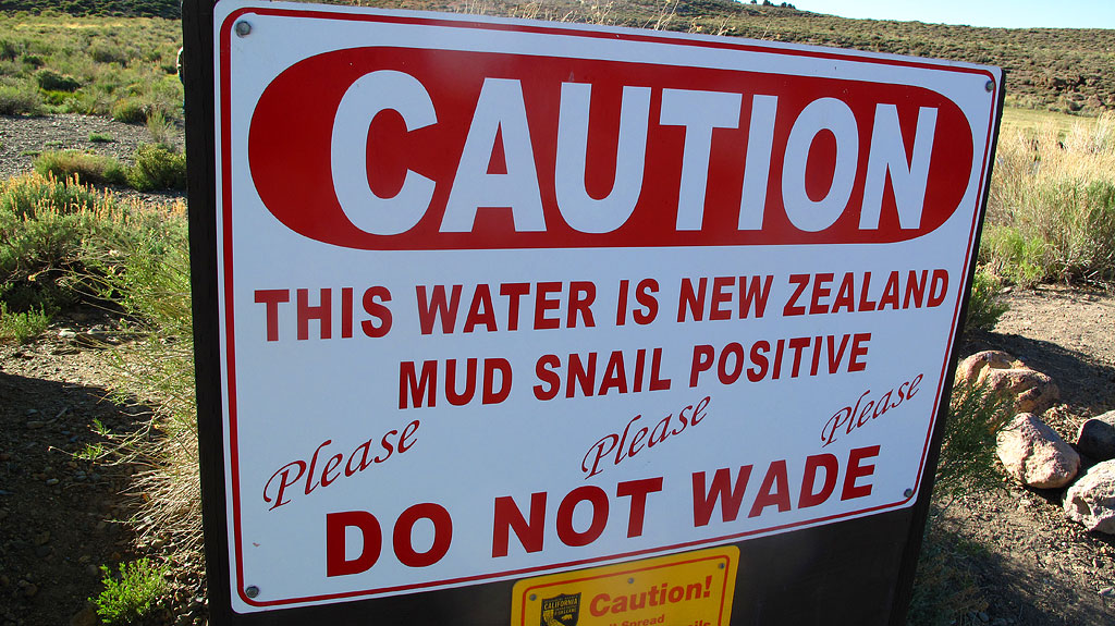 Please, no trundling on the New Zealand Mud Snail.