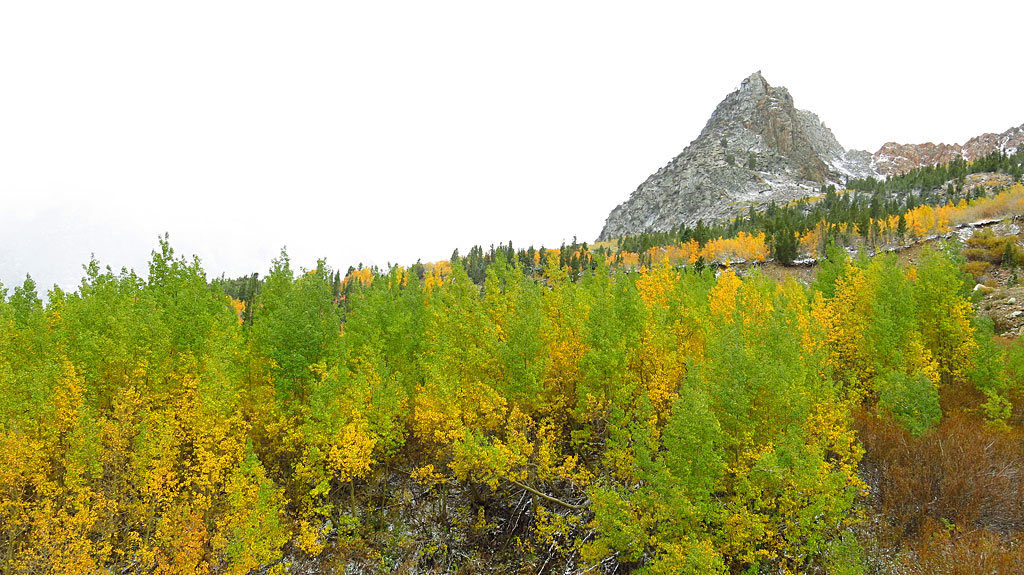 """Changing aspens along Warren Fork on the Tioga Pass Road, on the eastern side of Yosemite. This day was """"get into National Parks for FREE!"""" day, where The Man lets us stick it to him."""