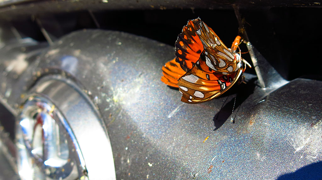 "Due to recent hurricanes, Baja was green and blooming. And as a result, the place was buggy - we mowed down butterflies on the highway by the millions. By the time we returned to SoCal, the front of the truck was covered in a  1"" thick crust of butterfly carcasses."