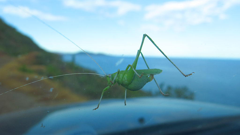We get distracted by a giant bug on the windshield.