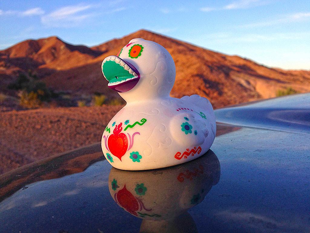 Día del pato muerto - our Baja traveling companion.