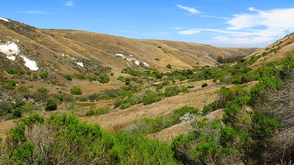 Near the top end of Scorpion Canyon, looking east.