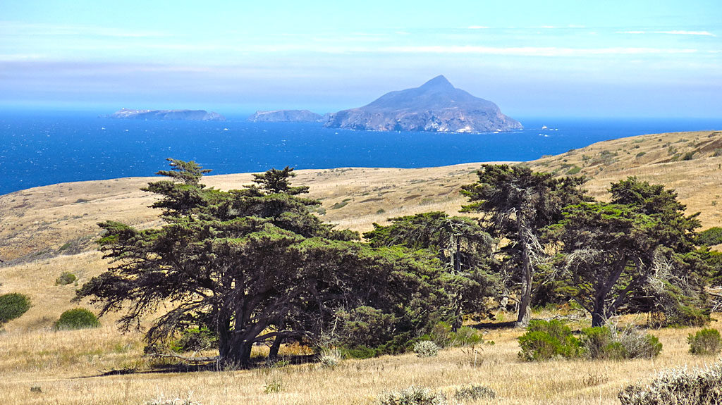 Looking east over non-native cypress trees to Anacapa Island - another island in the Channel Islands National Park.